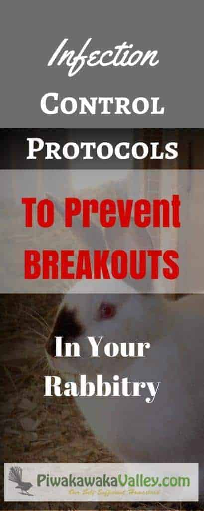 Rabbit Calicivirus - RCD / VHD is a vicious, deadly disease. Here are some protocols you can put in place to prevent RCD/VHD in your rabbit colony