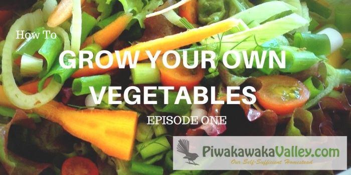 Starting a Vegetable Garden From Scratch | Gardening for beginners