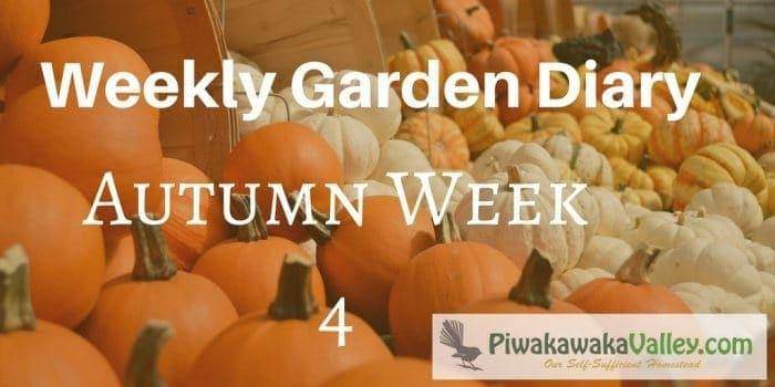 zone 9 weekly garden diary for autumn / fall week 4
