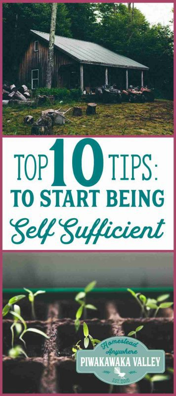 Being self sufficient isn't difficult! This homesteading quickstart guide will show you how you can start in your own backyard