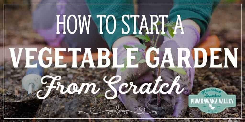 4 Easy steps to start a vegetable garden from scratch, a beginners guide to growing your own vegetables and food plants at home. Become more self sufficient this season and grow some veggies in your own garden. #beginnergarden #piwakawakavalley