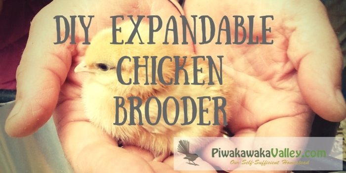 At this time of year there are a lot of people buying baby chickens and other baby poultry. They are fragile little beings that need to be kept safe and warm. This expandable DIY chicken brooder is exactly what you need.