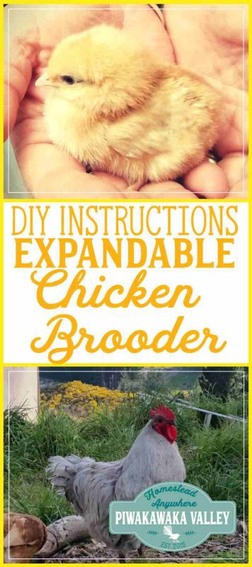 Raising chicks is tricky, they are frail and have many requirements. This expanding chick brooder is exactly what you need to keep new chickens safe and warm. #chickens #homesteading #diy