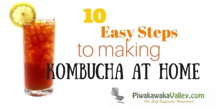making your own kombucha is much easier than you might thiink. There are so many technical guides out there, you can be forgiven for being confused. This lazy persons guide to kombucha removes all the fancy fluffing around and just makes simple, good, tasty kombucha. Find out how!