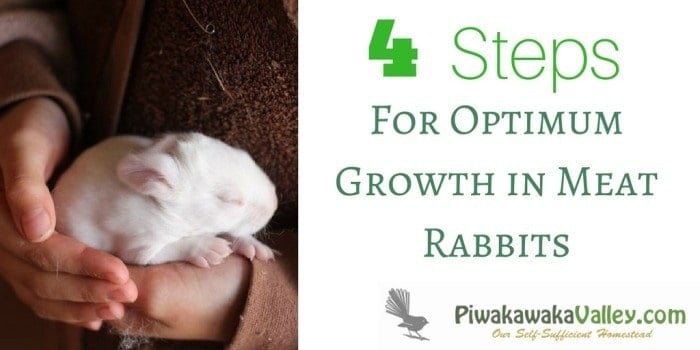 Do you wonder if your rabbits are growing as well as they could be? There are a few tips and tricks to make sure your meat rabbits are growing optimally. Find out here.