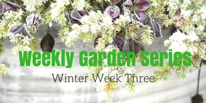 Weekly Garden Diary: Winter Week 3