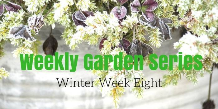 Weekly Garden Diary: Winter Week 8
