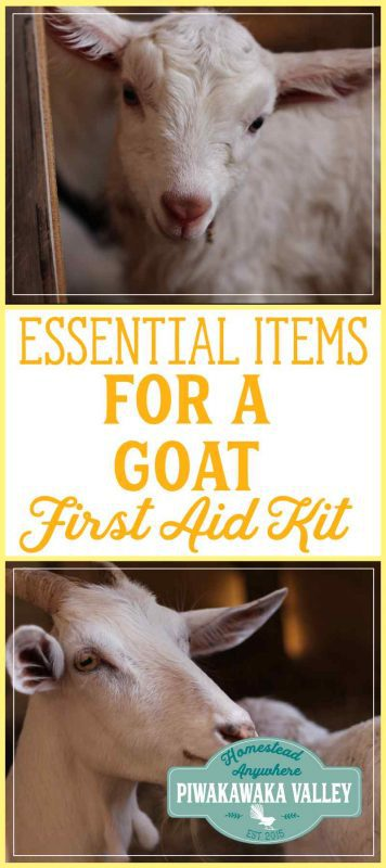 Do you have a first aid kit for your goats? They are easy to set up and every home with goats should have one. Find out how easy they are to put together today. #goats #farmingessentials #homesteading #animalcare
