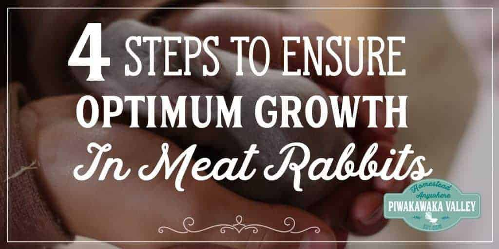 4 Steps to Ensure Optimum Growth in Meat Rabbits