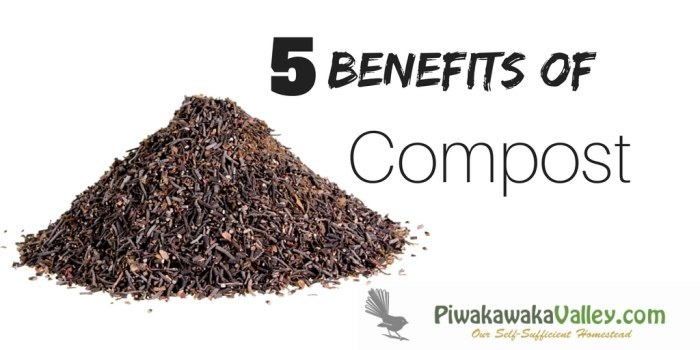 5 Reasons that Compost is Amazing | The Benefits to Composting