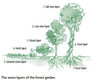 The 7 layers of a food forest from Gaia's Garden