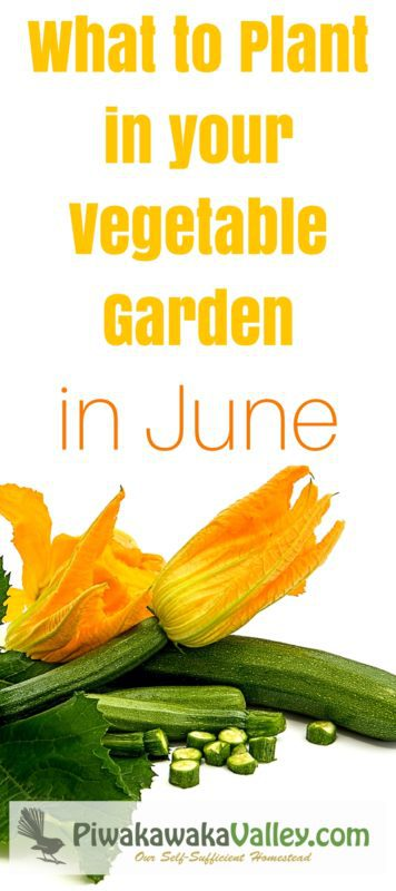 How do you know what to plant in your vegetable garden in June? Gardening information sure can get a bit confusing at times! You may get a book to follow along with what to plant in the garden week by week. But unless it is written for your specific area, you will probably struggle if you follow it. Here I will show you what to plant in your vegetable garden in June if you are in the Northern Hemisphere and what to plant in your vegetable garden in December if you are in the Southern Hemisphere.