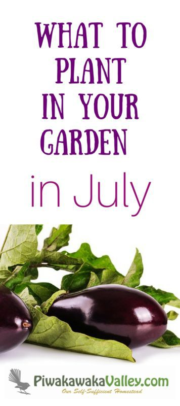 Knowing what to plant in your garden in July is very helpful for planning your garden. This is also what people in the southern hemisphere should plant in January!