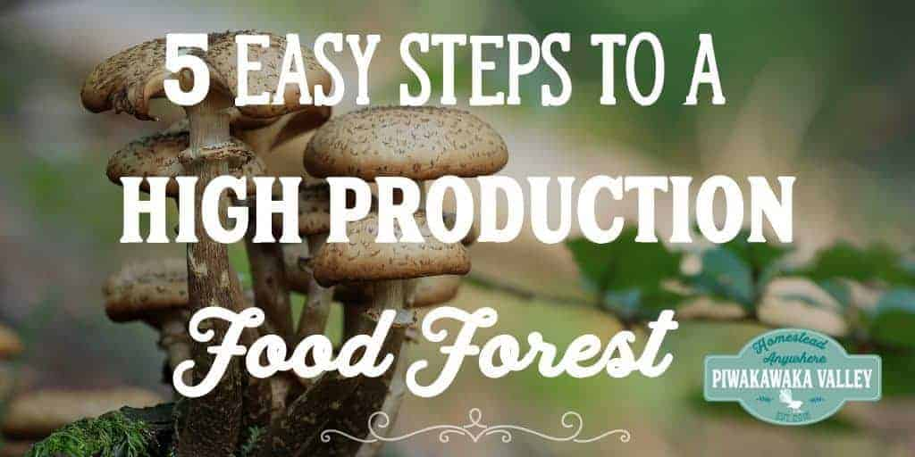 5 Easy Steps to A High Production Food Forest