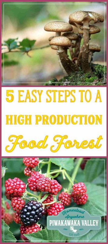 Growing a food forest is a great way to use permaculture to ensure you have a sustainable, organic, perennial food production space in your backyard. We include 5 steps to creating a food forest at your place.