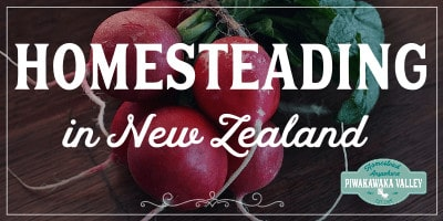 We are homesteading in New Zealand with great success, here is how we got started with our lifestyle block in the south of nz