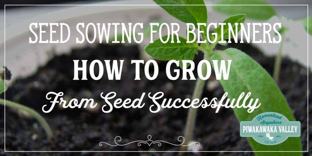 Seed Sowing Guide for Beginners | How to Grow Plants from Seed to Ensure Success