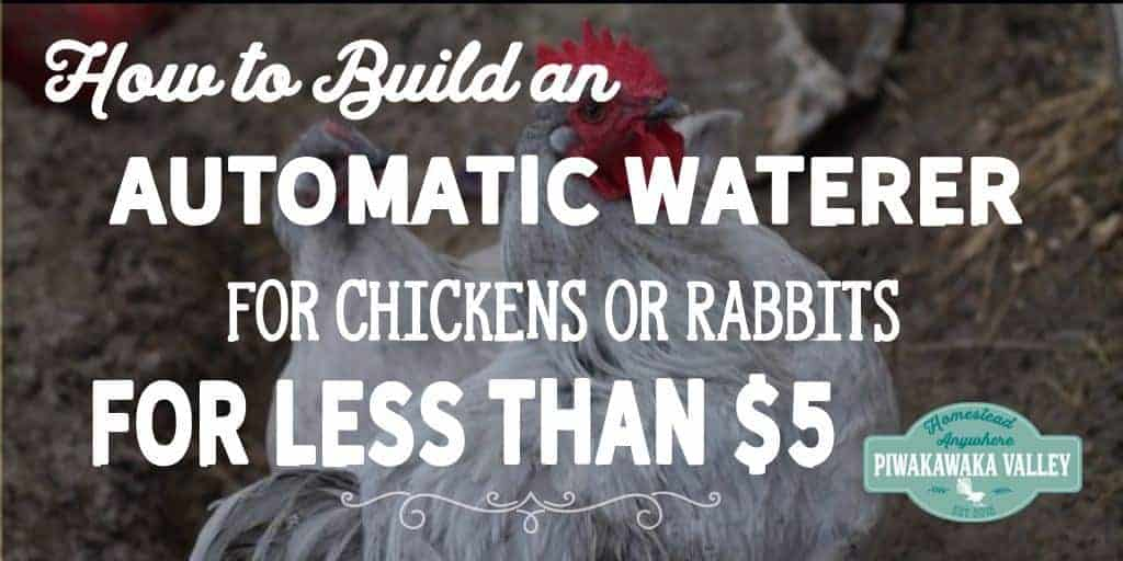 How to Build an Automatic Waterer for  Chickens or Rabbits for Less than $5