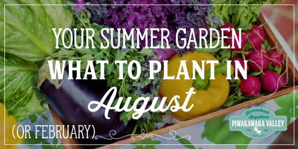 What to Plant in Your Summer Garden in August (or February)