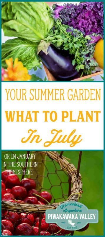 How do you what to plant in your vegetable garden in June? Gardening information sure can get a bit confusing at times! You may get a book to follow along with what to plant in the garden week by week. But unless it is written for your specific area, you will probably struggle if you follow it. Here I will show you what to plant in your vegetable garden in June if you are in the Northern Hemisphere and what to plant in your vegetable garden in December if you are in the Southern Hemisphere.