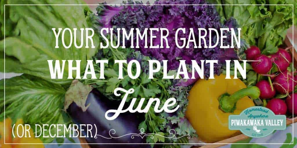 What to Plant in your Vegetable Garden in June in the USA or December in NZ | Summer Vegetable Garden promo image