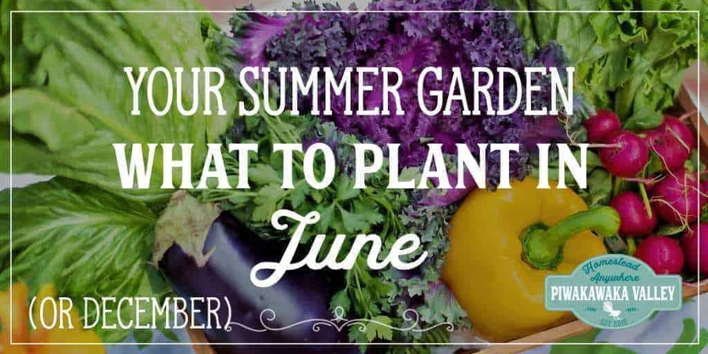 What to Plant in your Vegetable Garden in June (or December) | Summer Vegetable Garden
