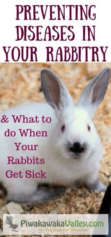 how to tell if a rabbit is sick