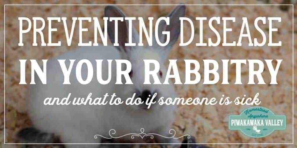Preventing Rabbit Diseases in your Rabbitry | How to Deal with a Sick Rabbit