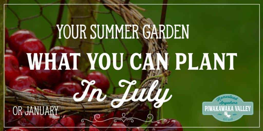 What to Plant in Your Summer Garden in July (or January)