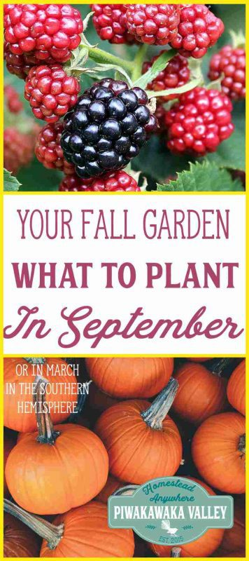 Knowing what to plant in your garden in September is very helpful for planning your garden. This is also what people in the Southern hemisphere should plant in March!