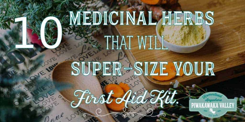 Medicinal Plants and Their Uses: 10 Easy to Grow Medicinal Herbs that will Super-Size your First Aid Kit.