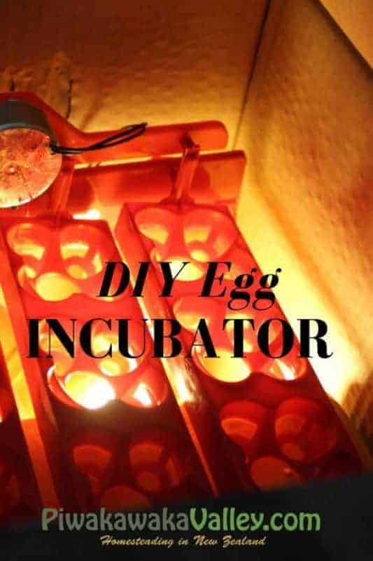 Quick and easy automated DIY egg incubator