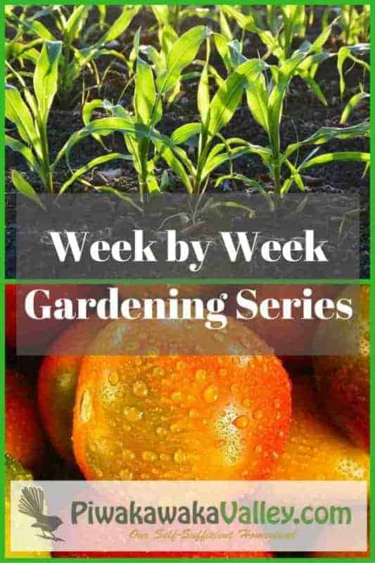 Week by week gardening series following permaculture principles for US Zone 8, Us Zone 9 and US zone 10. Follow along each week to see what you need to be doing.