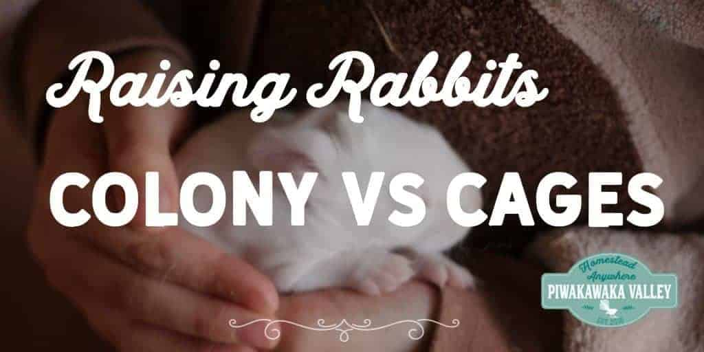 Colony Rabbits vs Cage Rabbits | What is the best way to raise rabbits?
