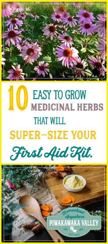 Have you thought about growing medicinal herbs at home but don't know where to start? Here I will show you my top 10 herbs to grow in your garden and their common uses. #gardening #herbs #prepping
