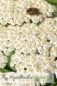 Top ten medicinal herbs that are super easy to grow and use at home