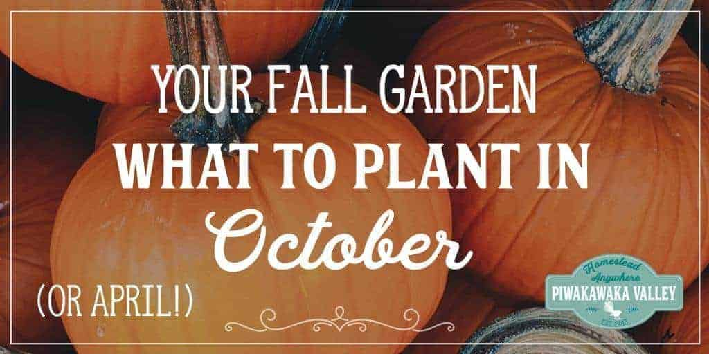 What to Plant in your Fall Vegetable Garden in October (or April)