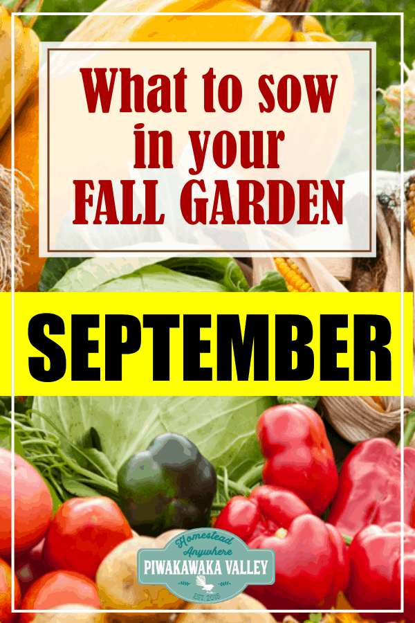 What to grow in your fall vegetable garden in September!