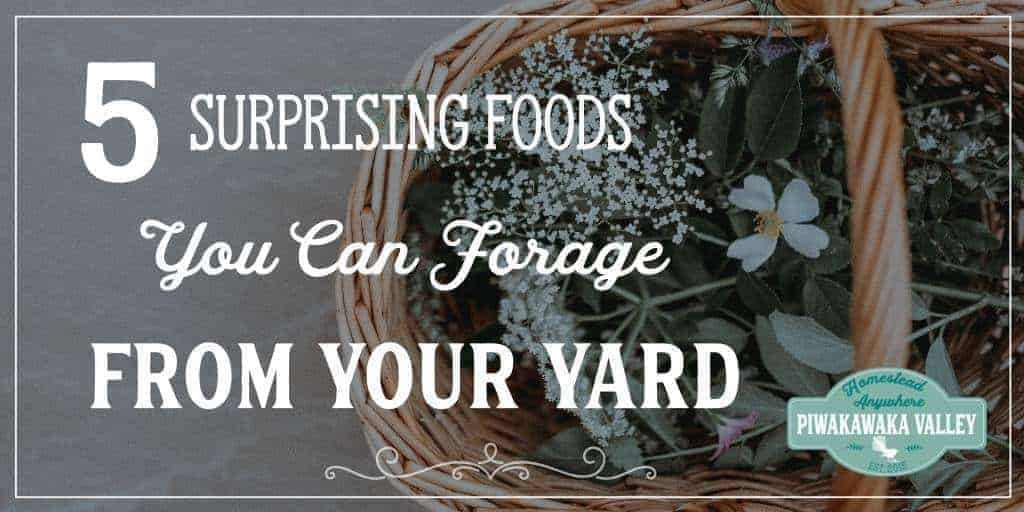 Foraging for food is super satisfying, but these 5 foods you do not have to travel far to find. In fact you can probably forage from your backyard for this list. It might surprise you that you can eat them, but you can, and they are delicious!