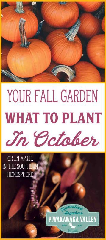 Here is some helpful advice for your garden this fall/autumn. A list of tasks to do and plants you can plant in October in the Northern Hemisphere and April in the Southern Hemisphere in your Fall vegetable garden