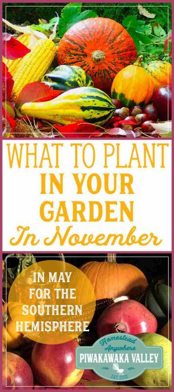 Not sure what to plant in your Fall garden this month? Here is a list of tasks and plants that are suitable for the month of November - or May in the Southern Hemisphere. #vegetablegarden #fallgarden #homesteading