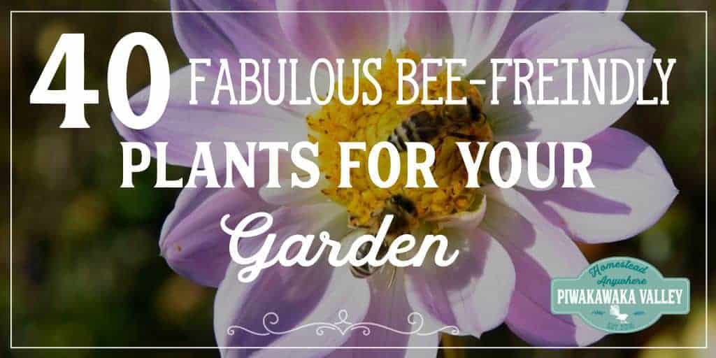 40 Fabulous Bee Friendly Plants that Honeybees Love