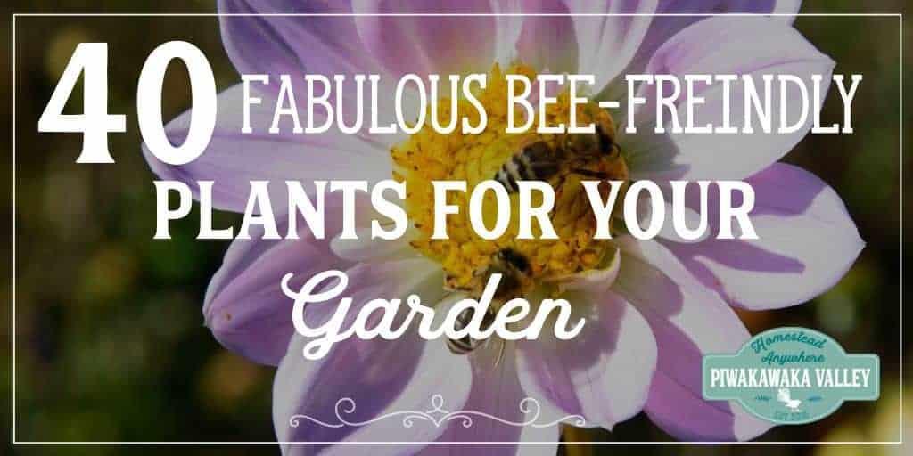 40 Fabulous Bee Friendly Plants that Honeybees Love