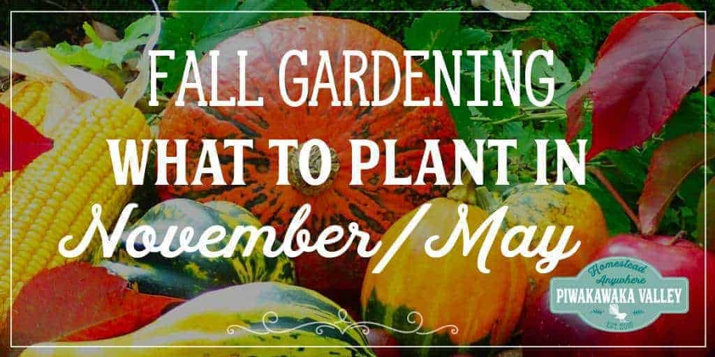 What to Plant in your Fall Vegetable Garden in November (or May)