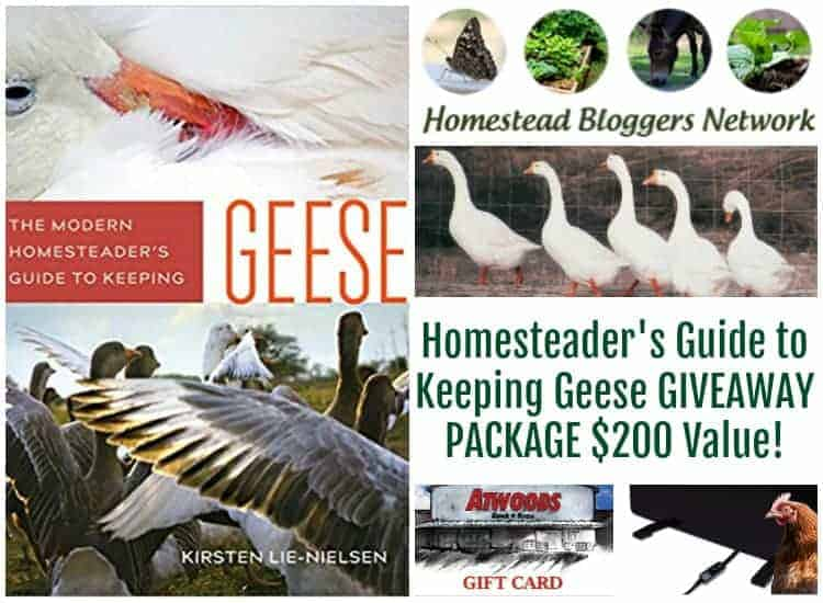 Modern Guide to Keeping Geese Book Giveaway!!
