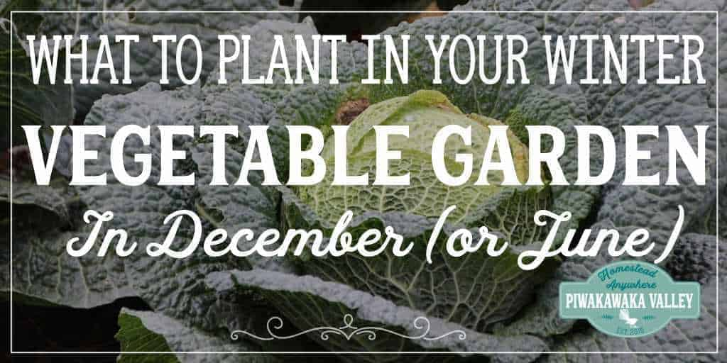 What to Plant in your Winter Vegetable Garden in December (or June!)