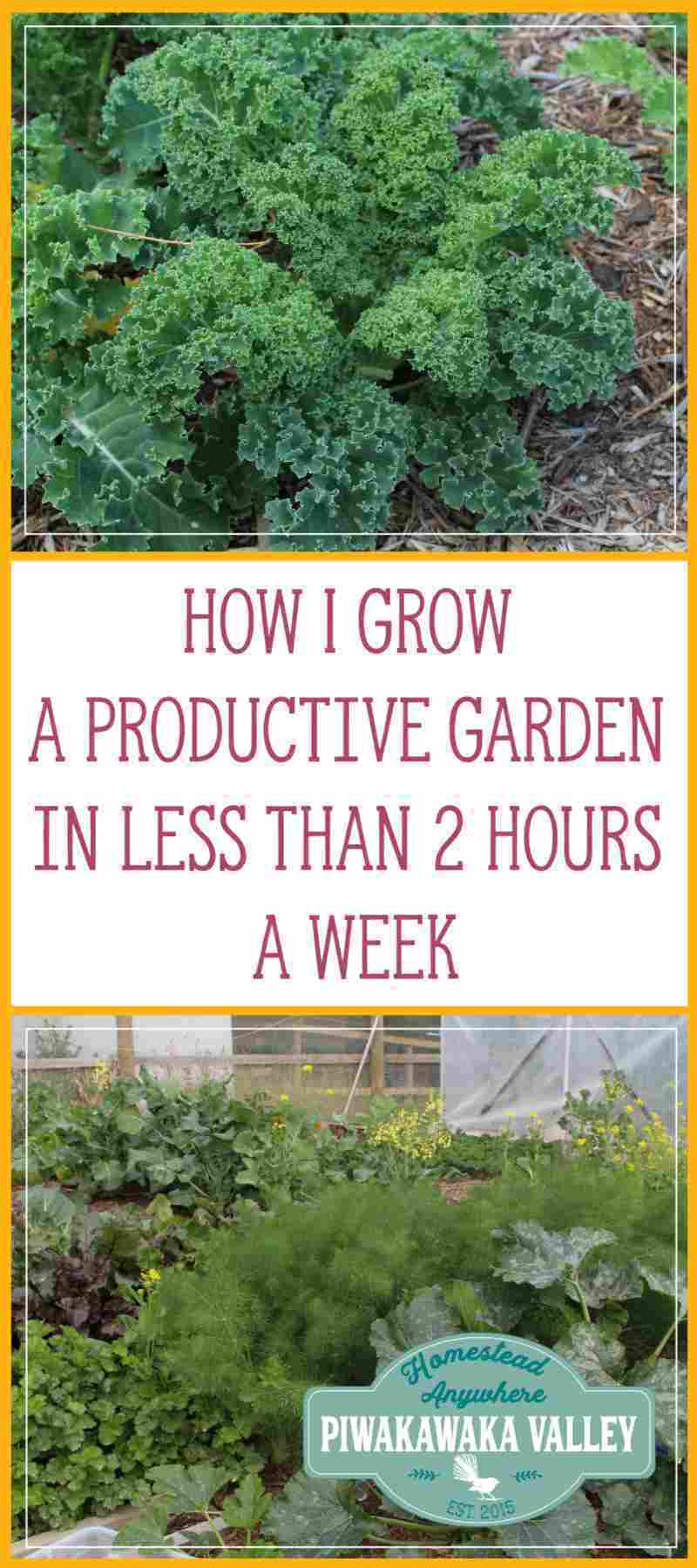 I successfully grow a very productive garden and feed our family of 5 year round from it in less that 2 hours per week. Let me share my secrets with you. #gardening #beginner #course