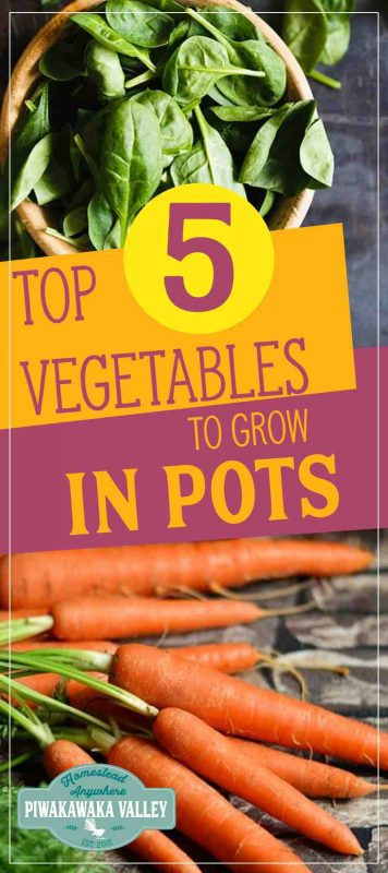 Do you have limited space or a really short season? Try growing these 5 vegetables in pots for year round vegetable production #vegetablegarden #selfsustainable #fresh