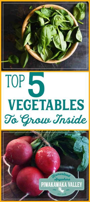 I seriously miss fresh vegetables over the winter. Here are 5 plants that grow really well indoors over winter. #garden #vegetablegarden #growinginpots #homesteadanywhere grow vegetables inside
