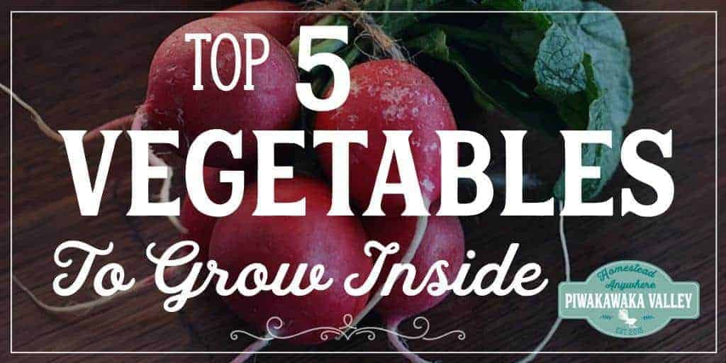 I seriously miss fresh vegetables over the winter. Here are 5 plants that grow really well indoors over winter.